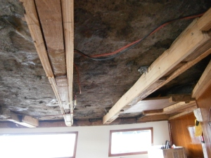 Well, after removing the teak trim and old plywood/moldy headliner, we sprayed/scrubbed away all the old mold...