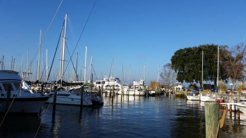 sailboats at fairhope