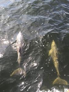 pensacola dolphins